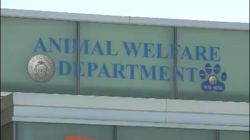 Animal Welfare Department_118589