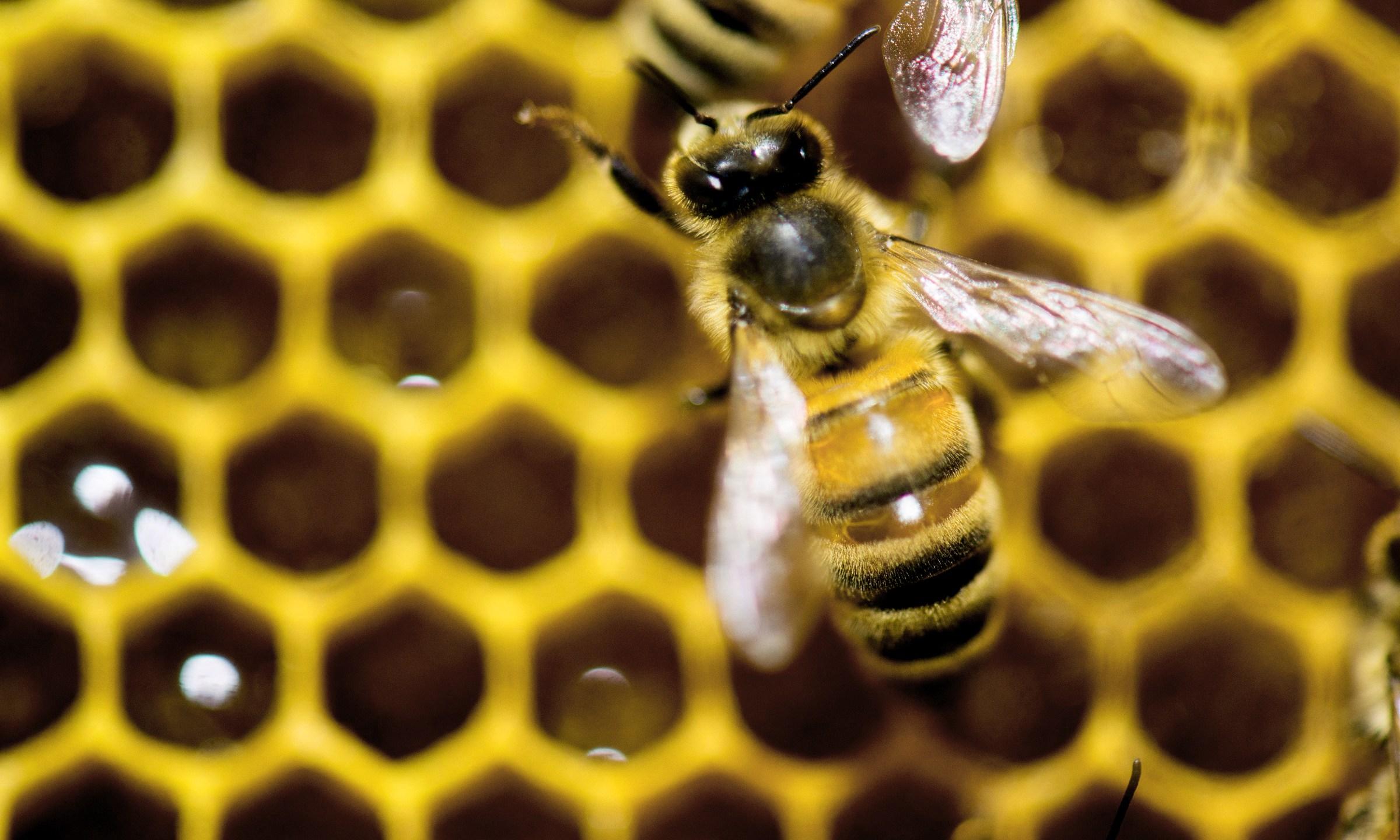 Bee Plan_142976