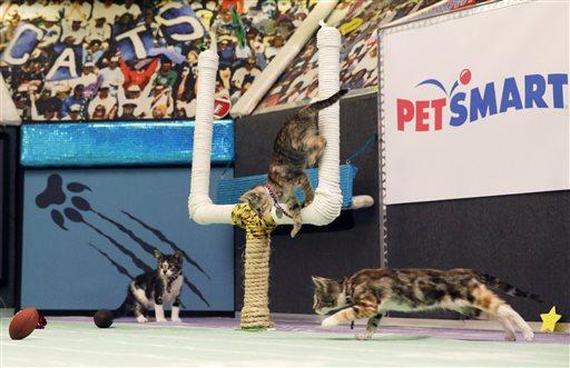 Kitten Bowl III_307139