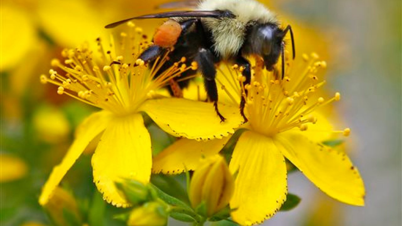 Local bee organization highlights importance of pollinator habitats