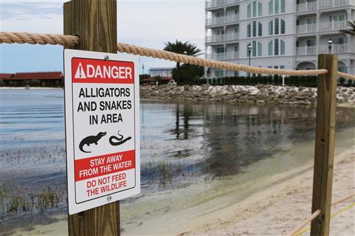 AP-Alligator Drags Toddler_390511