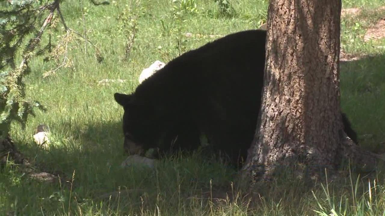 Black Bear_190746