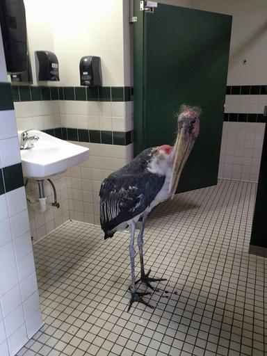 Hurricane Matthew US Stork in Bathroom_452347