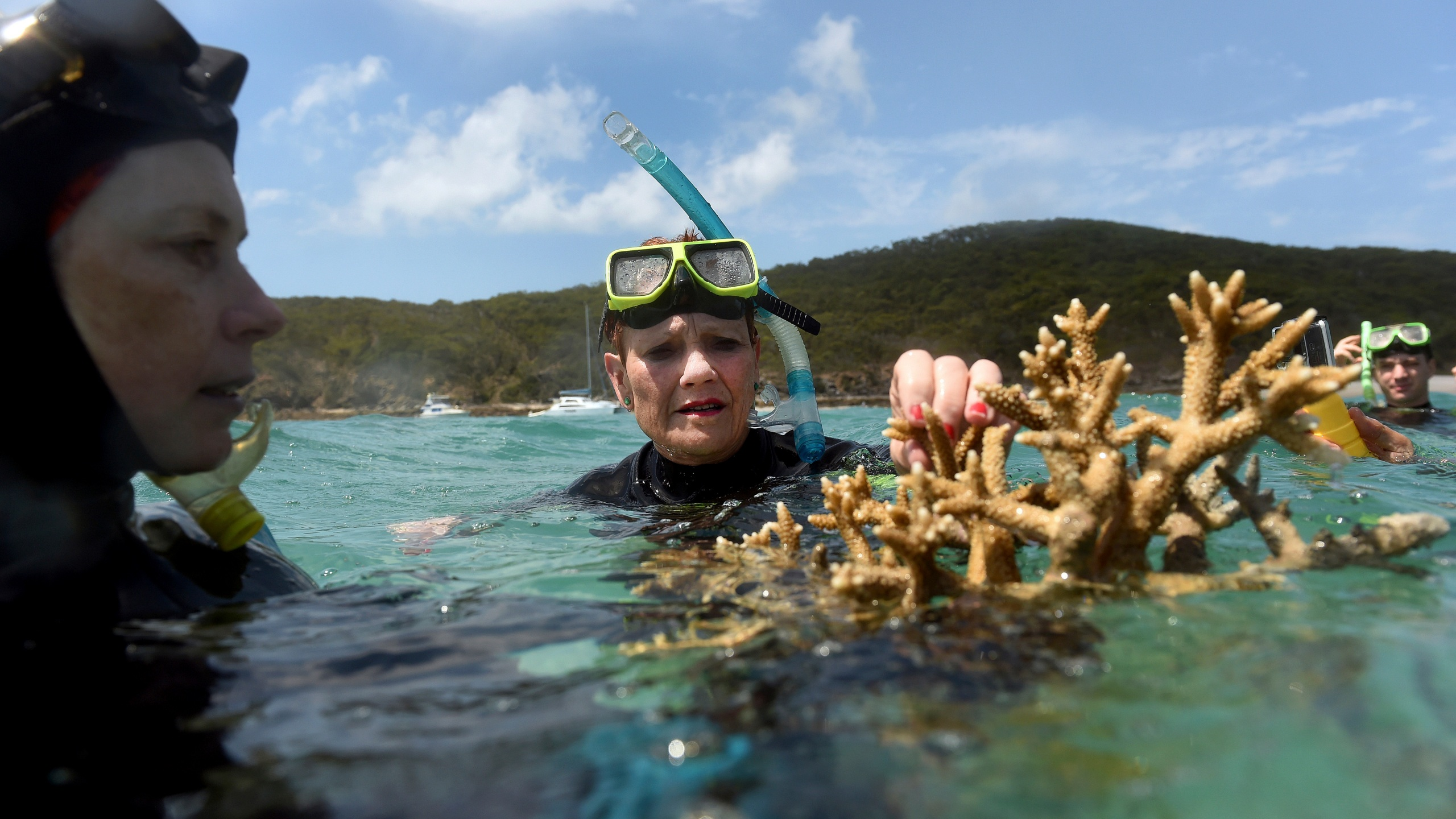 Australia Dying Coral_482582