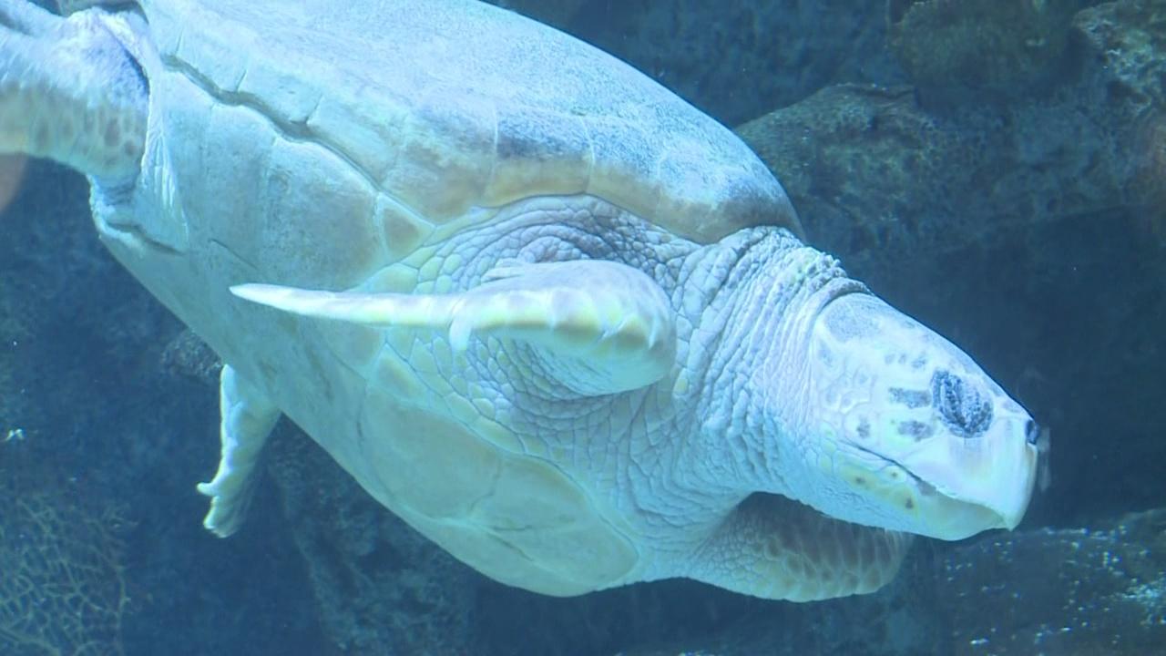 sea-turtle_511297