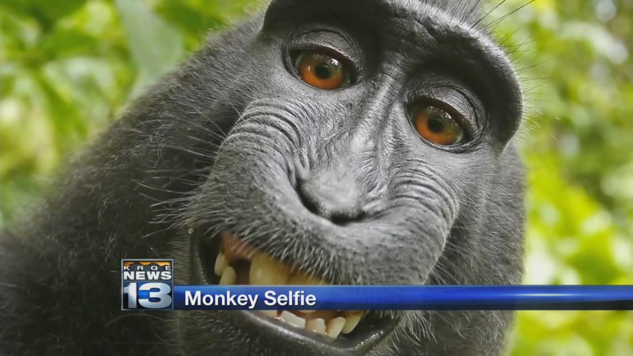 monkey_633402