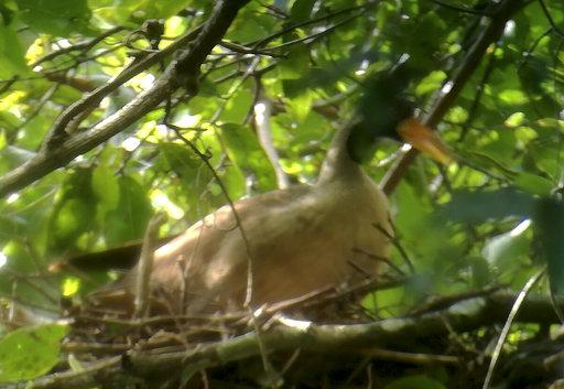 Cambodia Rare Bird_640552