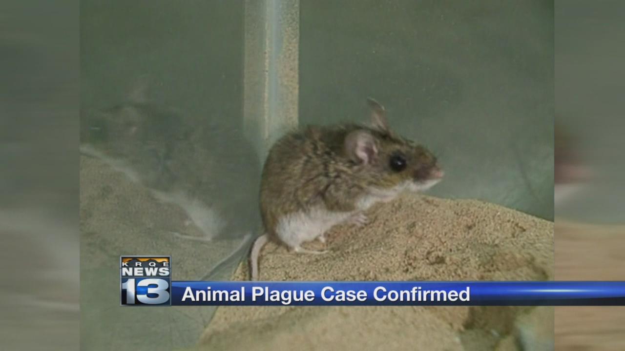 Bubonic plague_654585