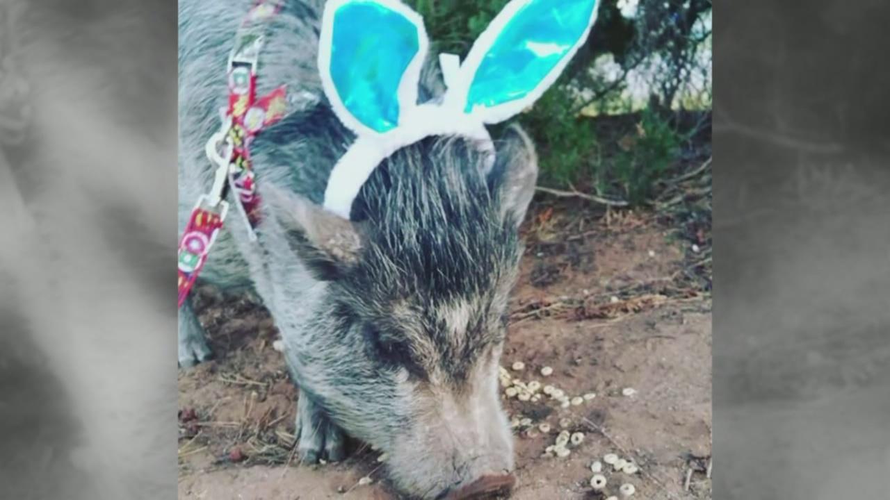 Porkchop the pig_659792