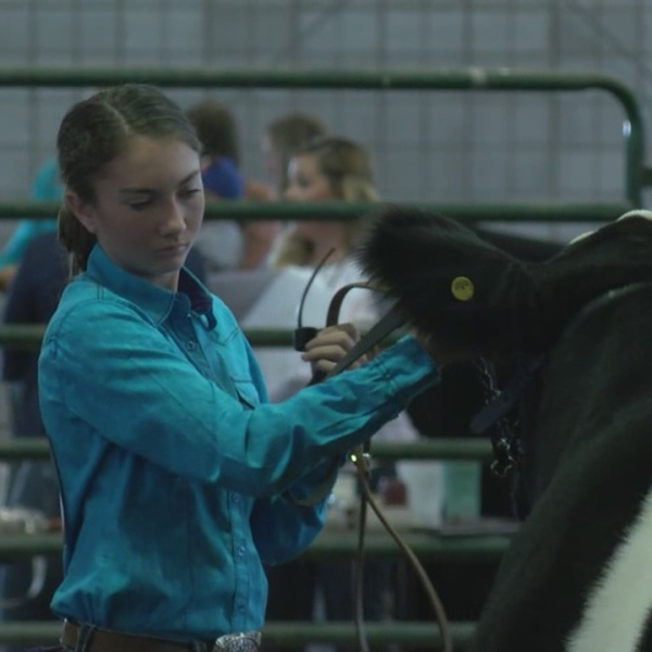 State Fair Junior Livestock Show_678166
