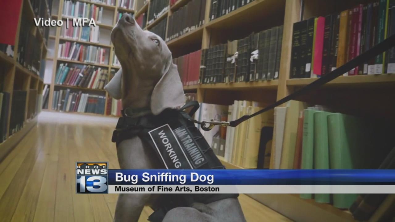 bug sniffing dog_768176