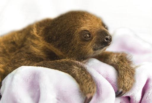 National Aviary Sloth_765802