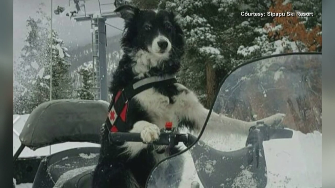 snow dog_777925