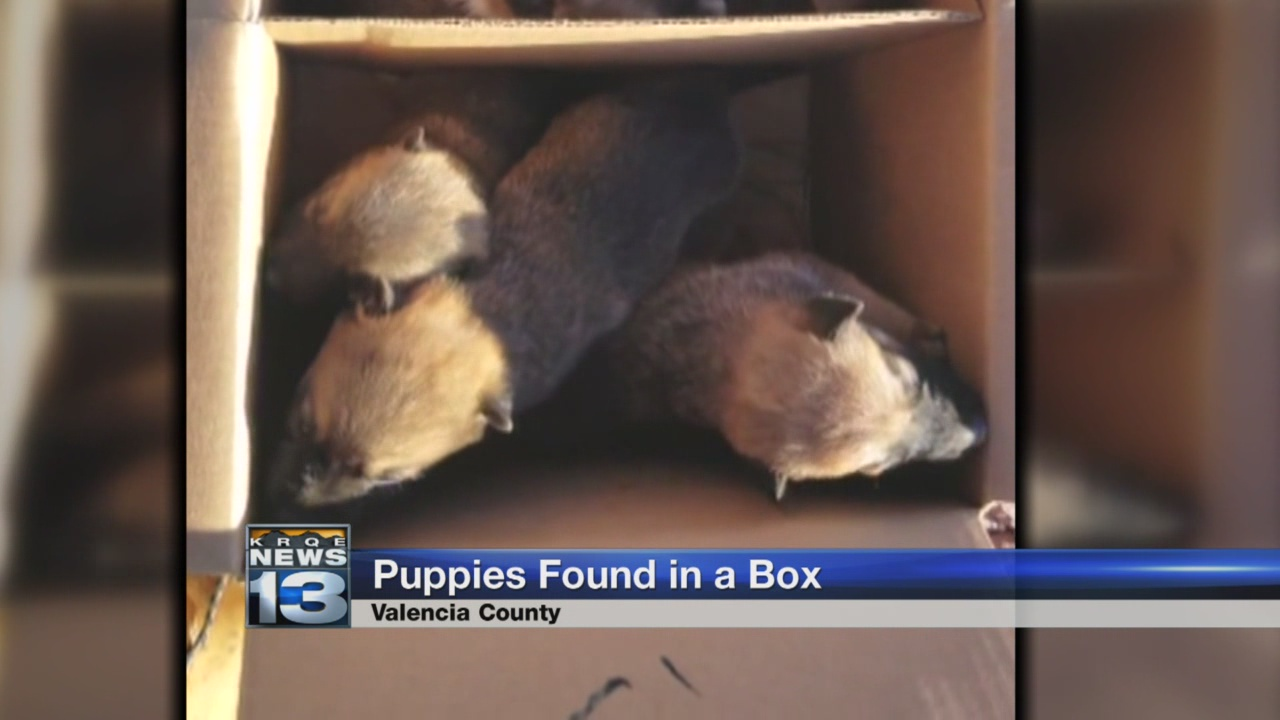puppies found_784329