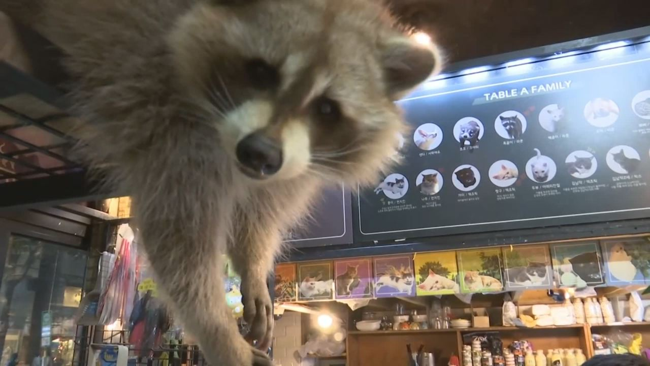Raccoon Cafe_790813
