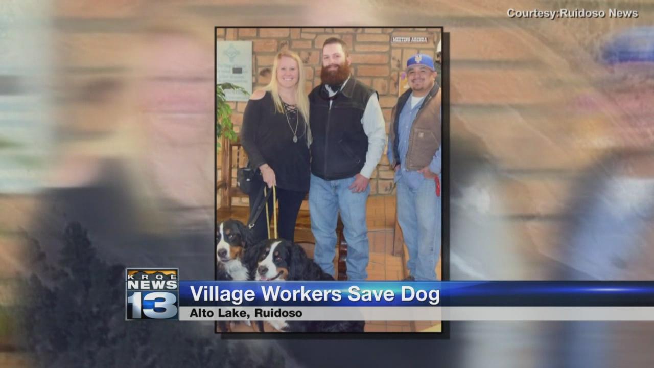 village workers save dog_799646