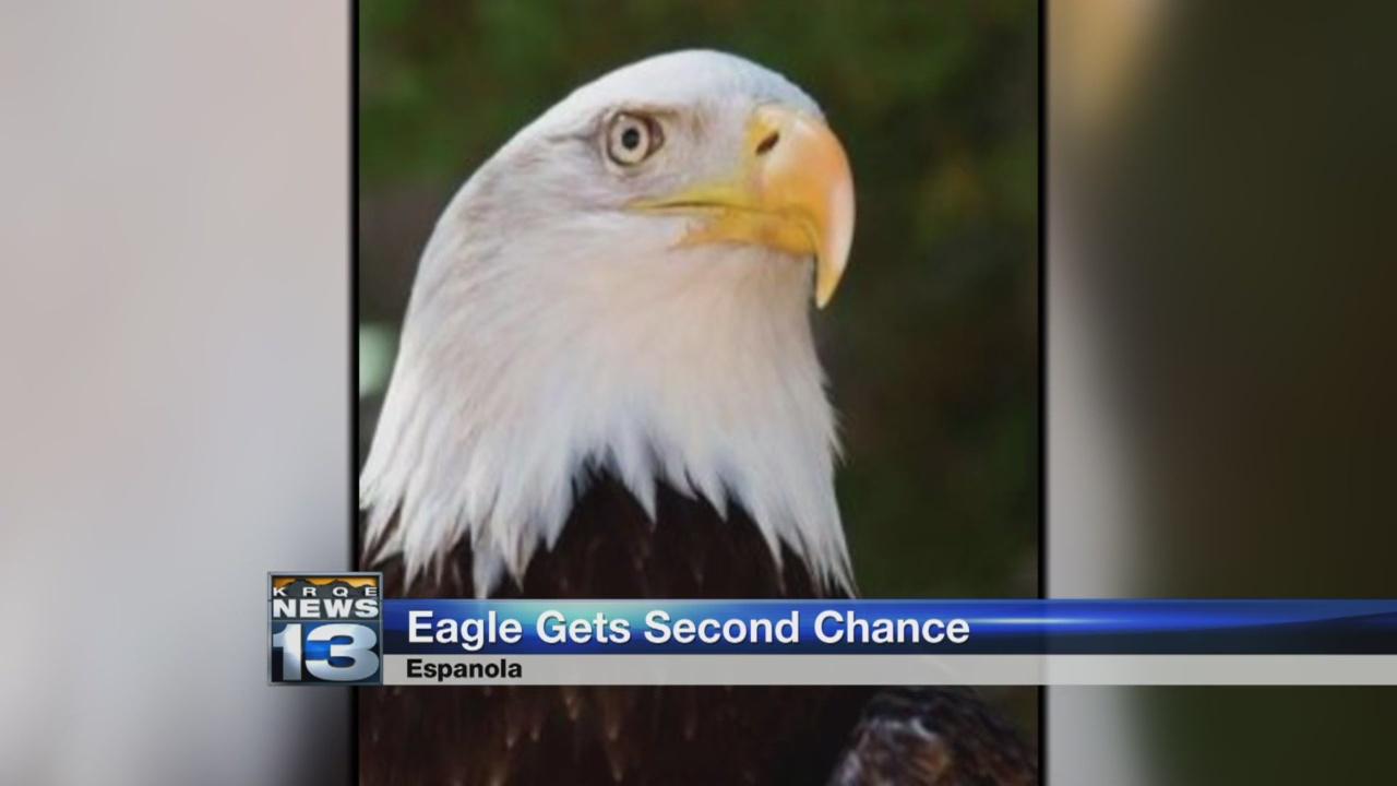 Eagle second chance_1522071675081.jpg.jpg