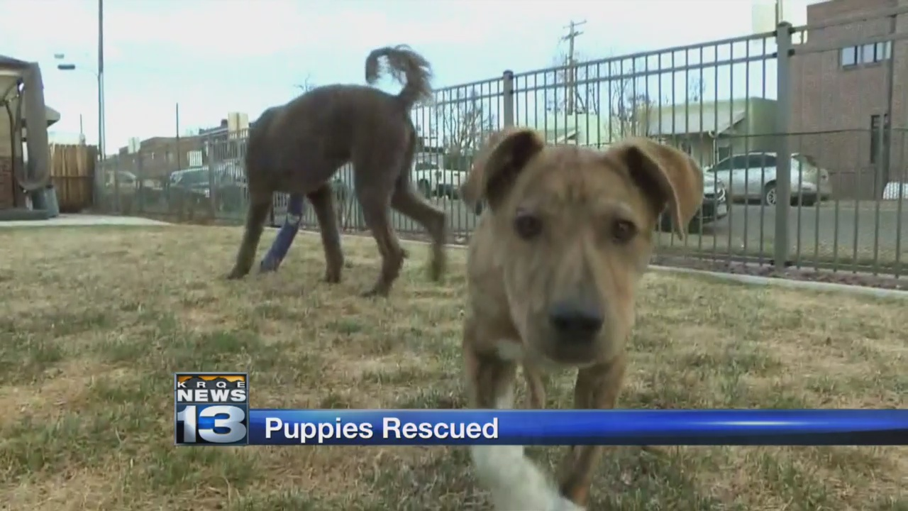 Puppies found abandoned in New Mexico rescued by Colorado group_1520659111291.jpg.jpg