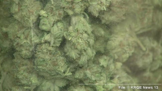 stockimg marijuana buds processed; close-up_1520125326681