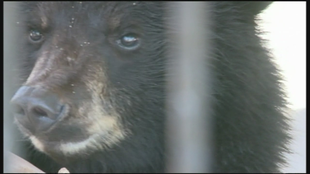 roswell zoo bear_567149