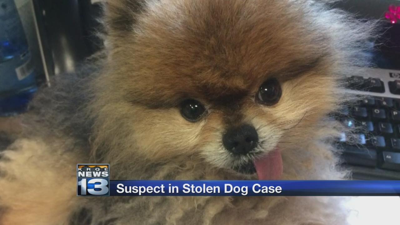 suspect in stolen dog case_1522296410427.jpg.jpg