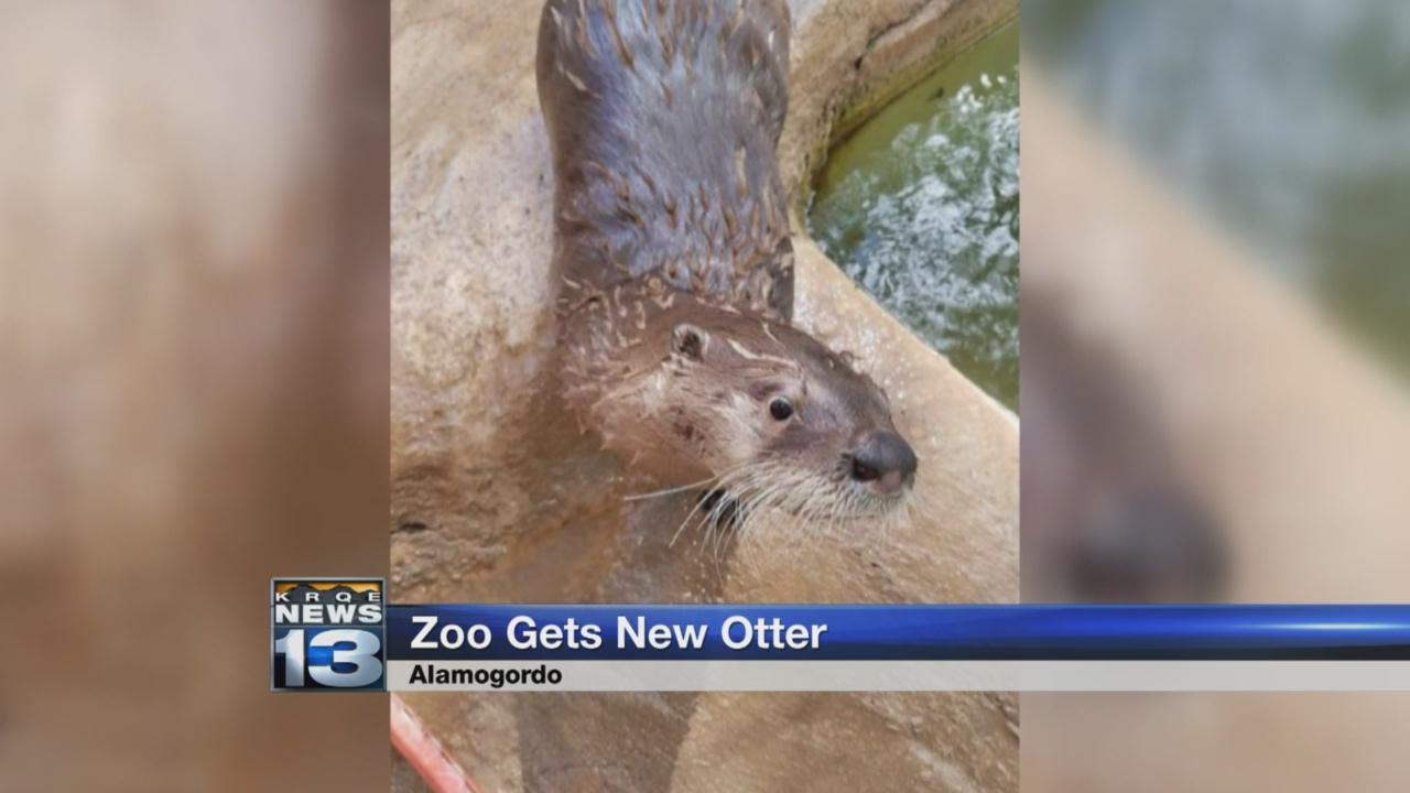 Alamogordo zoo welcomes new river otter_1524524429530.jpg.jpg