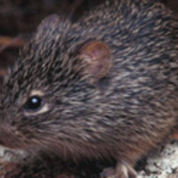 Health officials warn hantavirus cases tend to spike in the spring