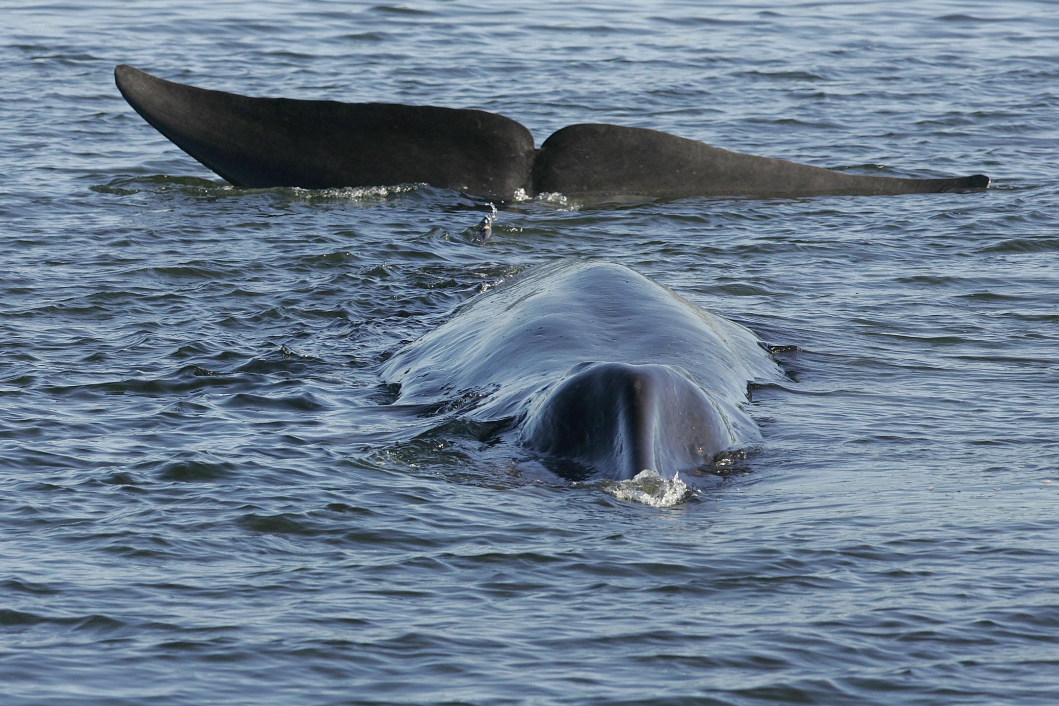 U.S. Iceland Whaling_1524071033070