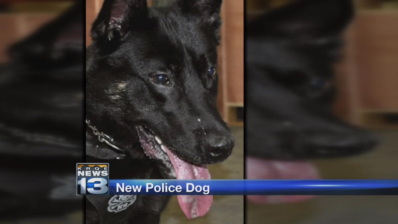 Bosque Farms new police dog_1526703126967.jpg.jpg