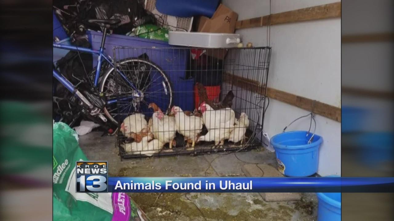 animals found in uhaul_1526443597655.jpg.jpg