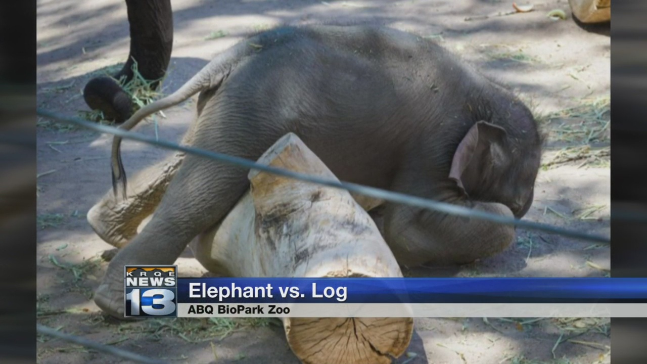 elephant vs. log_1526942228071.jpg.jpg