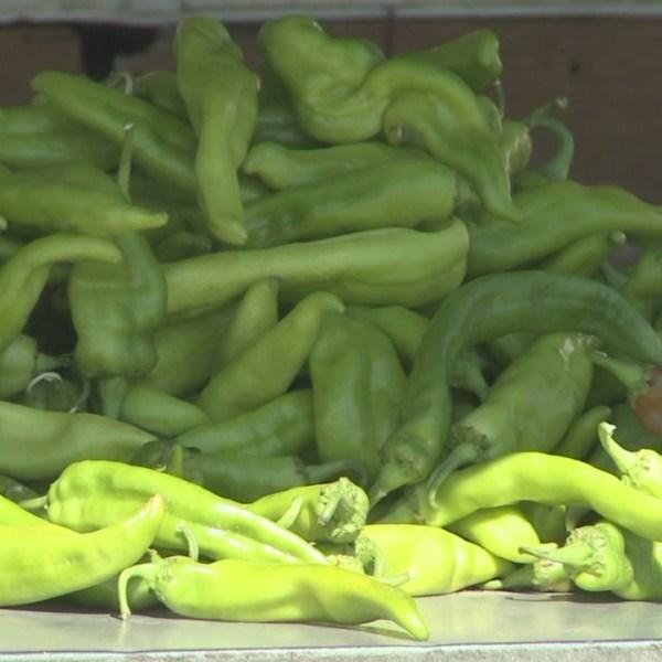 green chile stockimg