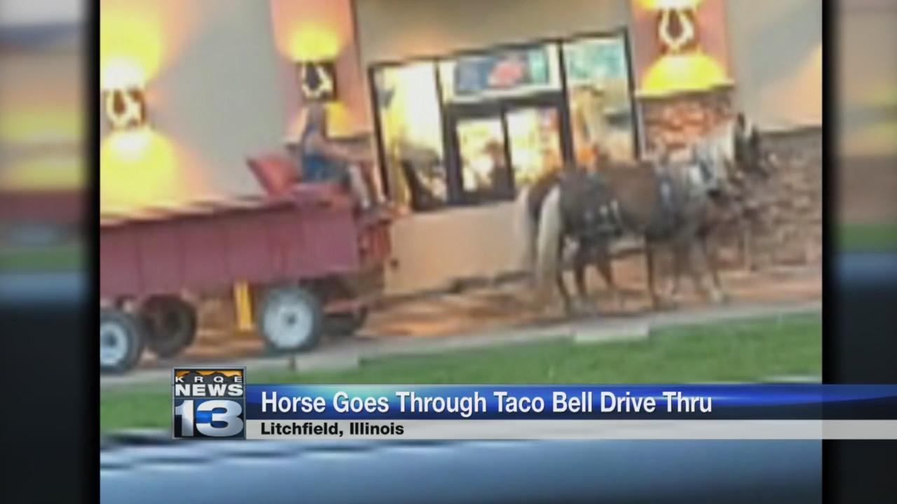 taco bell horse_1527253315985.jpg.jpg