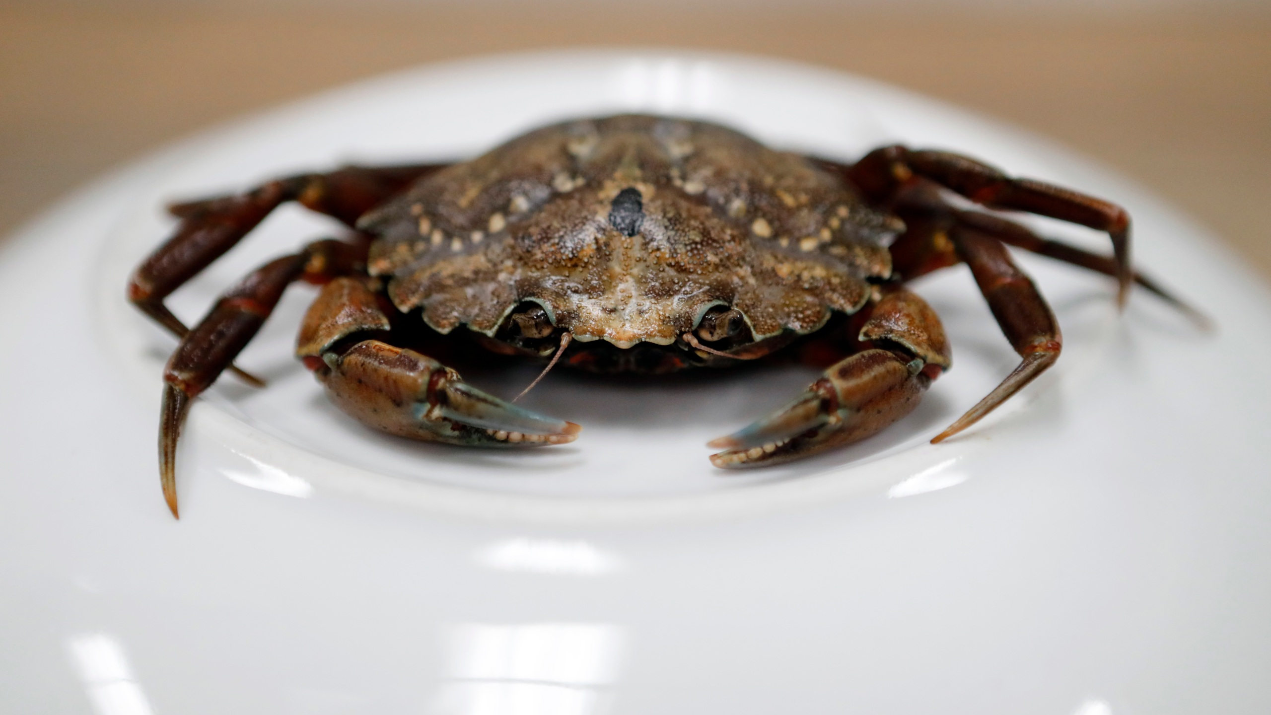 US Crab Conference_1528377751523