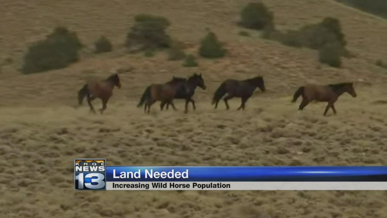 horses_1529605629144.jpg