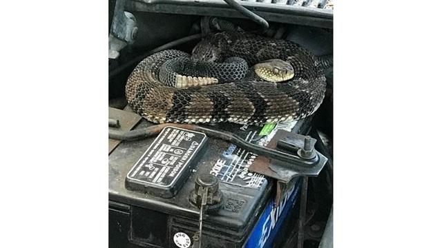 rattlesnake-delaware-county_1529590440323_46208506_ver1.0_640_360_1529593499837-727168854.jpg