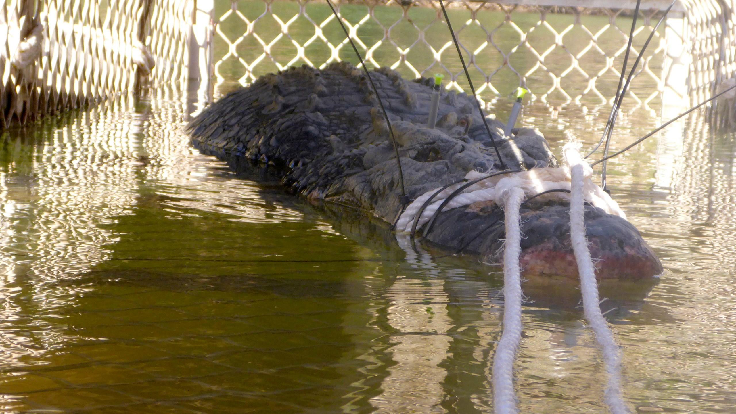 Australia_Crocodile_33782-159532.jpg16811802