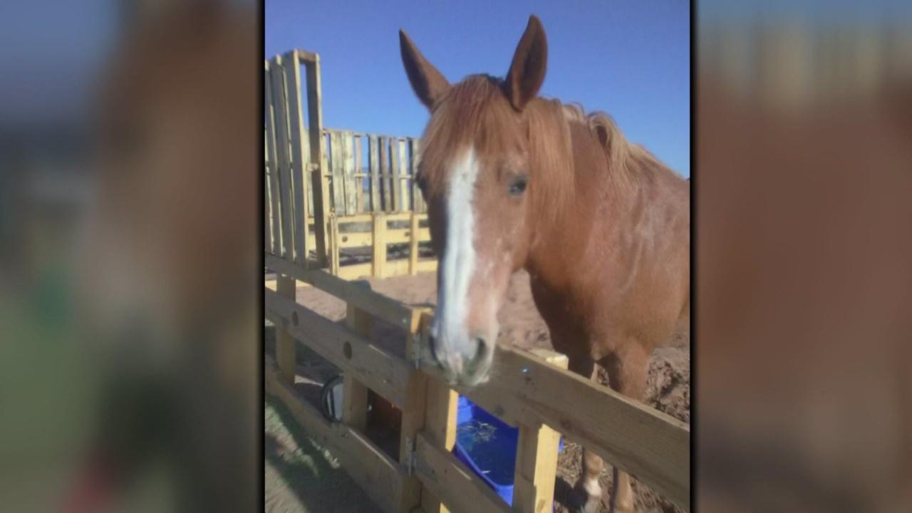 Los Lunas missing horse_1530658299202.jpg.jpg