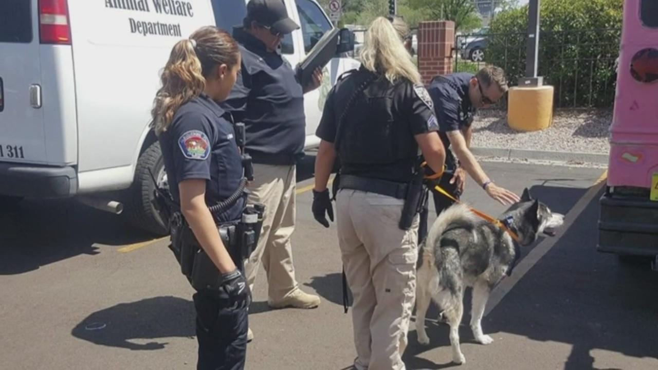 Officers rescue Husky locked in hot vehicle_1533874812548.jpg.jpg