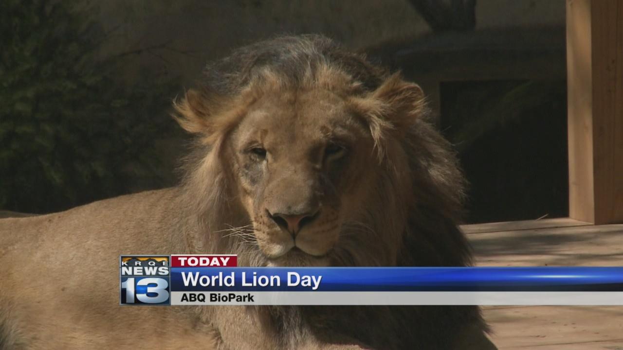 world lion day_653545