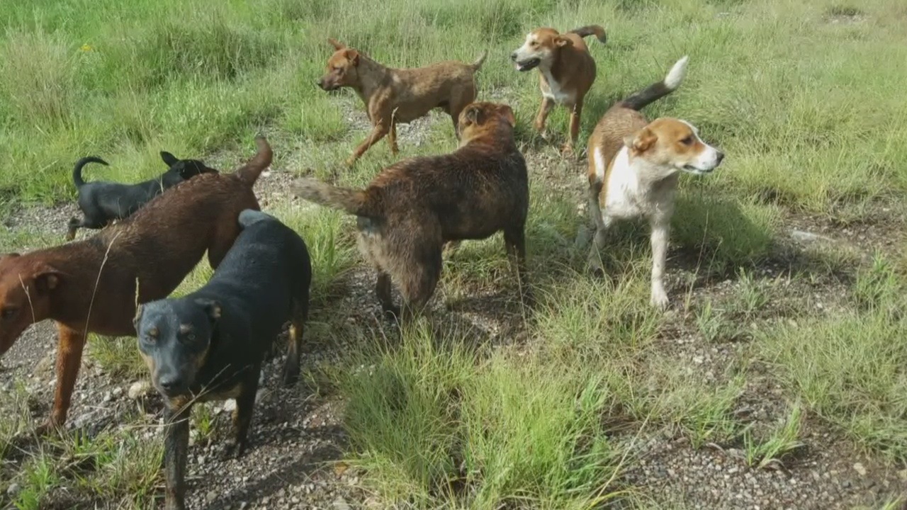 Final dogs rescued from Mescalero Apache Reservation_1536792517992.jpg.jpg