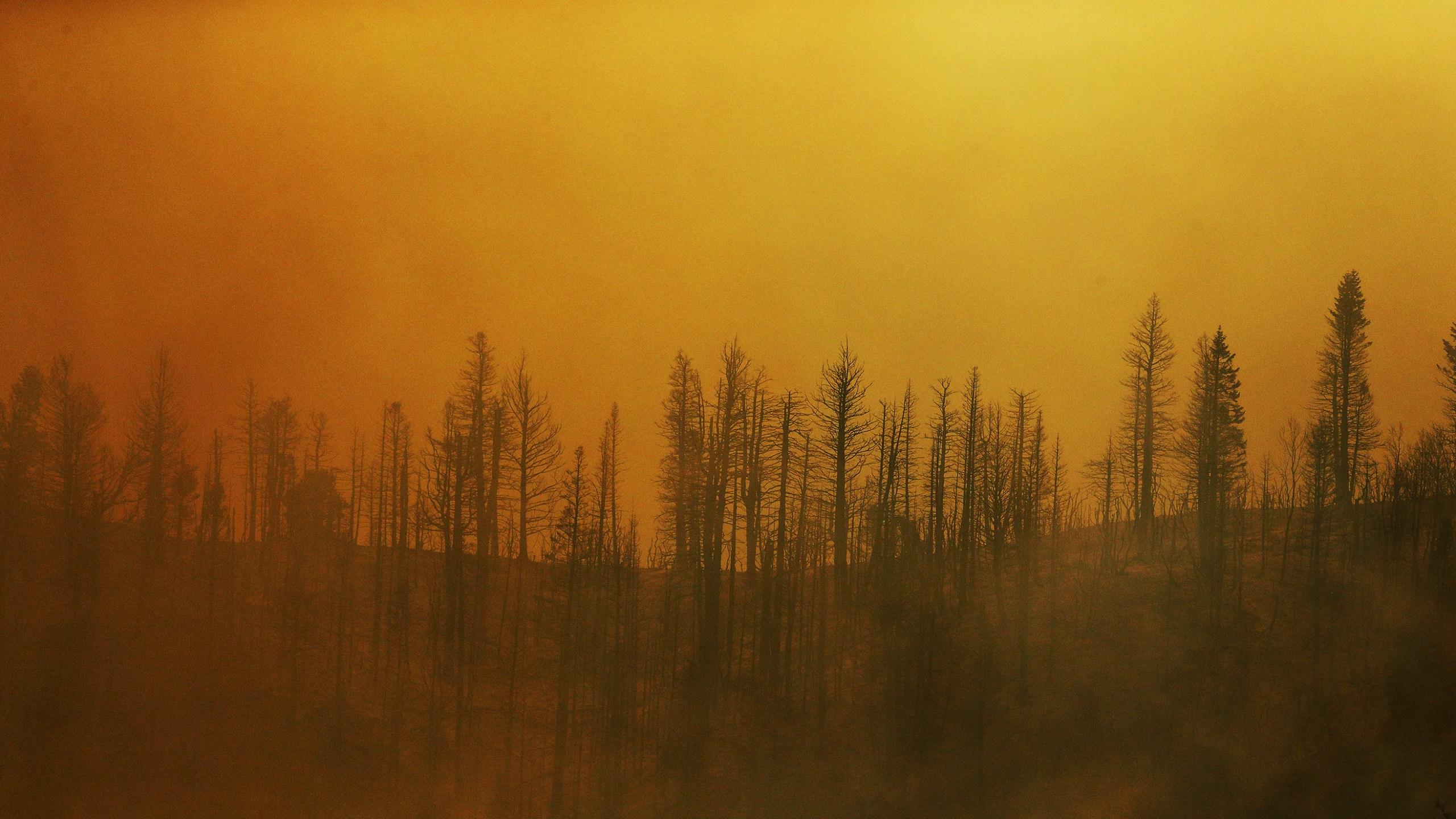 Western_Wildfires_79028-159532.jpg41065783