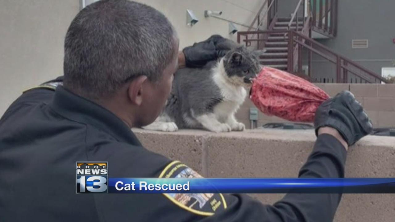 Animal Welfare officers save cat with bag stuck on its head_1540355309273.jpg.jpg