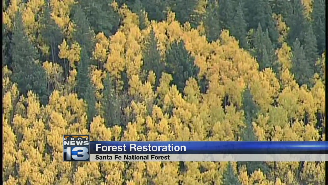 Forest restoration_1539713740366.jpg.jpg