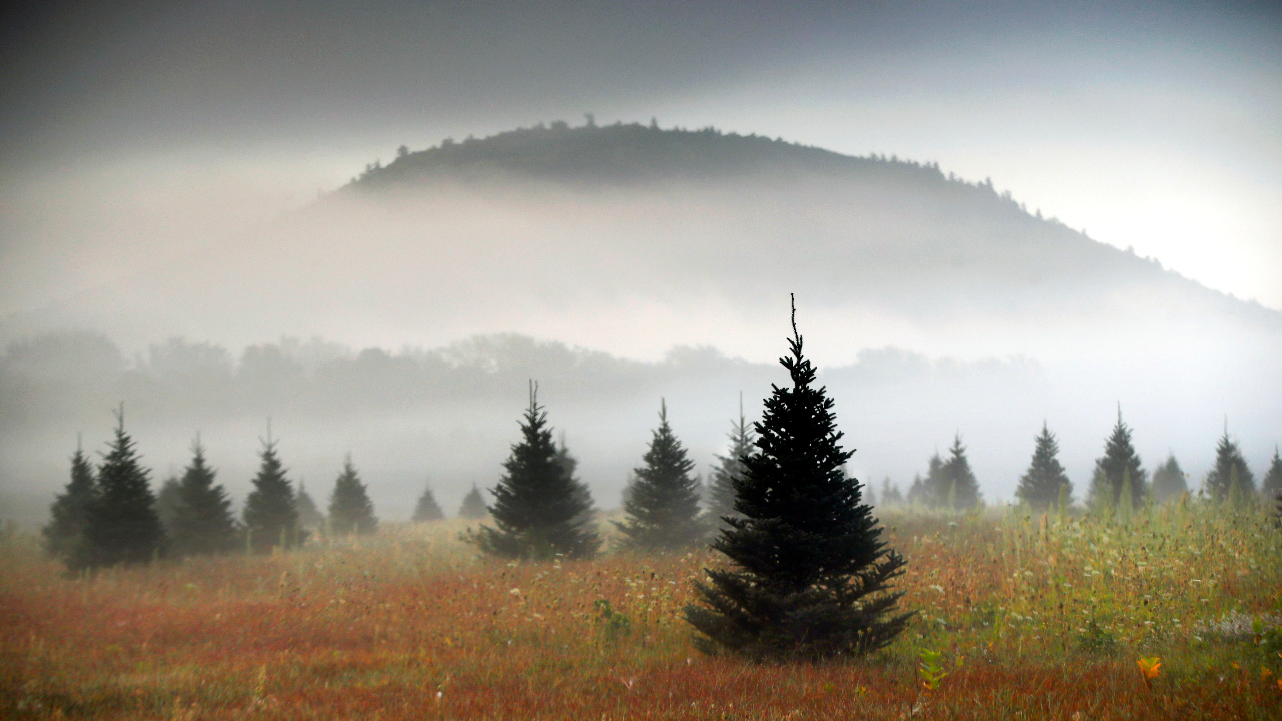 holidays with 60-foot Christmas tree