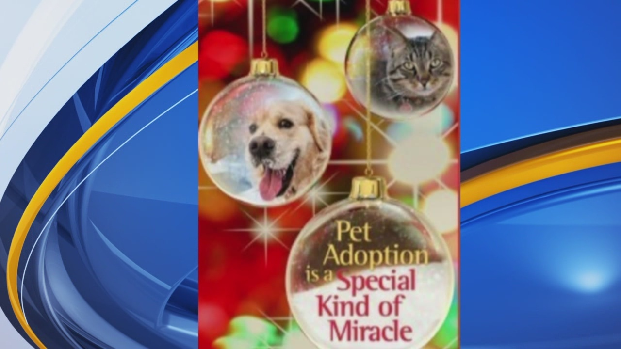 Albuquerque Animal Welfare Department Hosting Holiday Pet