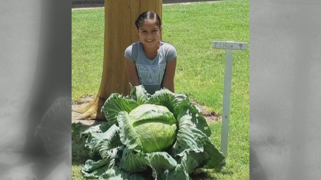 Artesia girl wins cabbage growing contest's 'Best in State' award_1543966745596.jpg.jpg