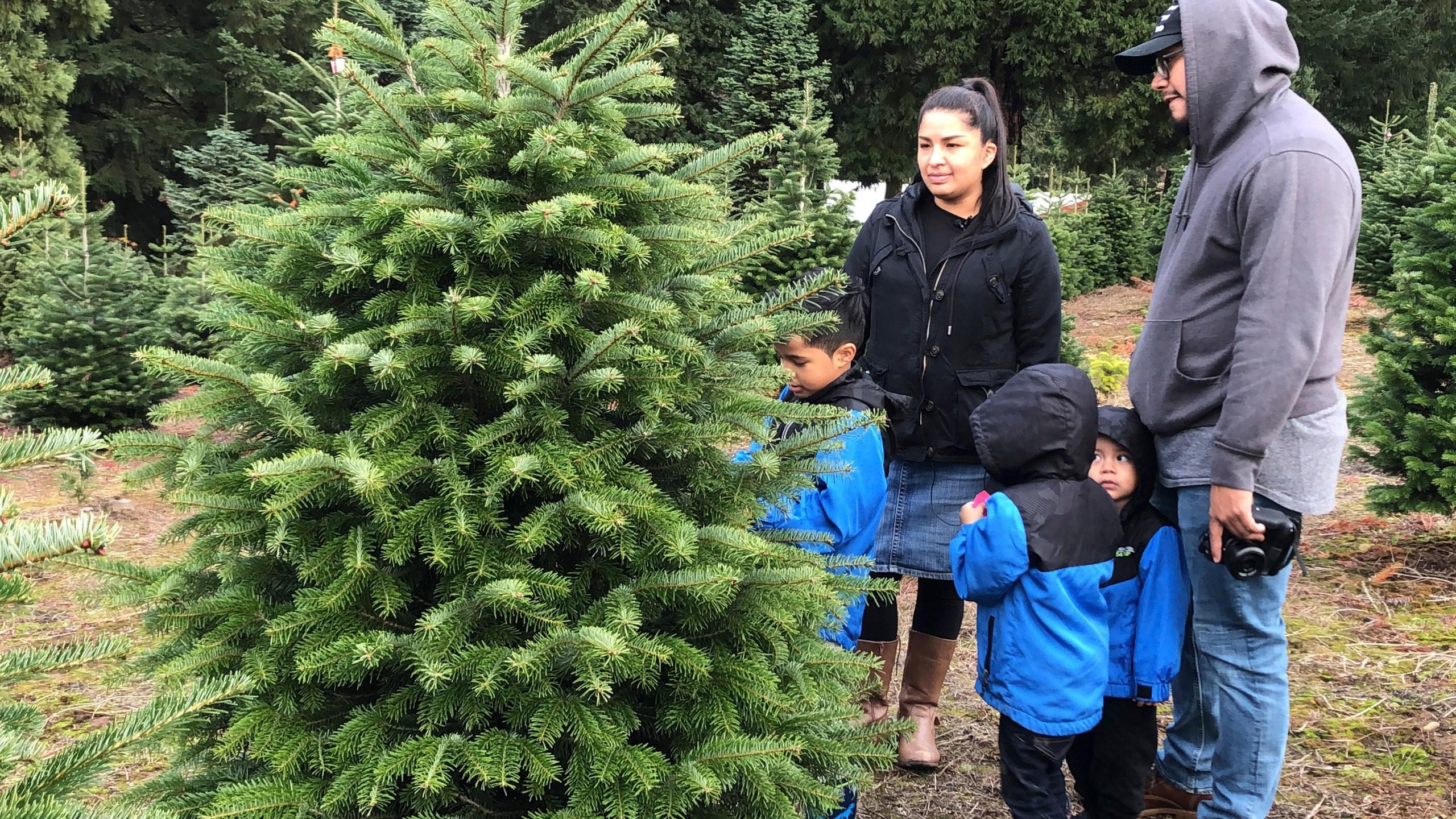 Christmas_Tree_Debate_56488-159532.jpg73419220