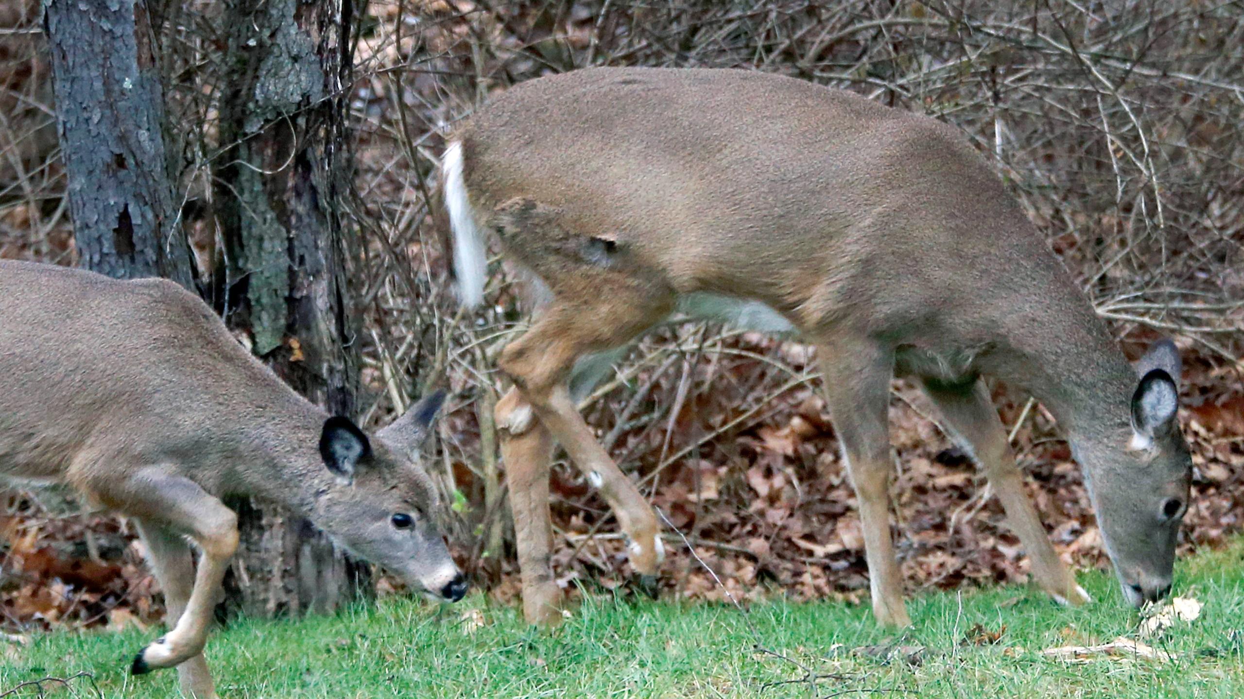Deer Harsh Winter_1545069983132