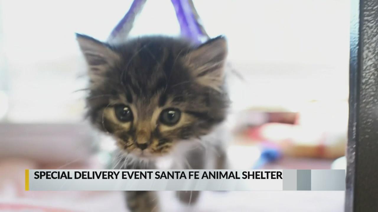 Santa to deliver adopted pets from Santa Fe Animal Shelter_1544744931879.jpg.jpg